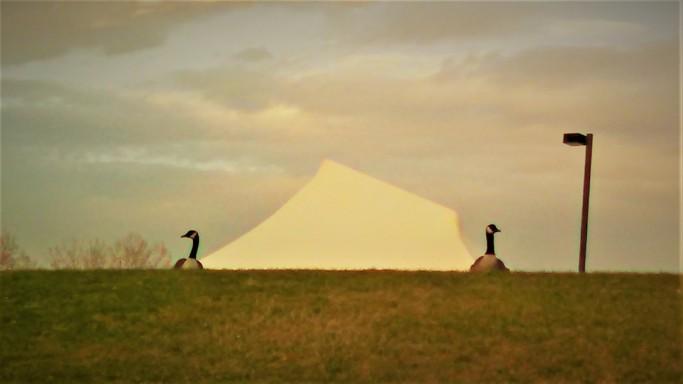 geese tent lightpole IMG_20170417_192045_968